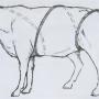 Как обследовать корову или быка?