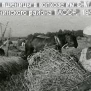 Аграрное производство ТАССР в годы Великой Отечественной войны: вклад сельских тружеников в Победу