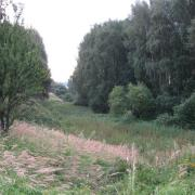 Продажа земельного участка 5,5 га для сельскохозяйственного использования в дер. Сосновка, Трубческого района, Брянской области