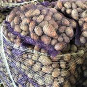 Картофель оптом сорт Ред Скарлет фотография