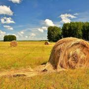 Травосмесь сенокосная фото