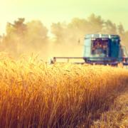 Россельхозбанк на четверть увеличил кредитование сезонных работ в 2021 году