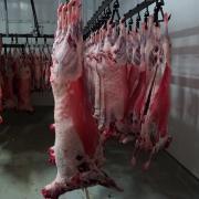 Баранина в тушах 18-24 кг, от 1 тонн и более