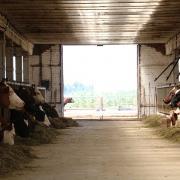 Чтобы успешно продавать настоящие молочные продукты, кубанский фермер создал кооператив