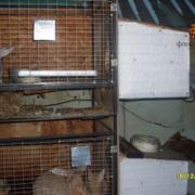 Инфракрасные нагреватели для крольчатников, животноводческих комплексов