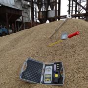 Влагомер зерна