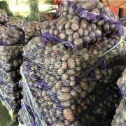 Картофель оптом сорт Ред Скарлет фото