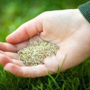 Травосмесь для гидропосева (семена газонных трав)