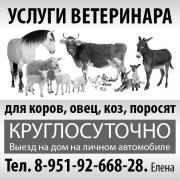 Ветеринарные услуги в Перми.