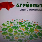 Продаем свинок в живом весе