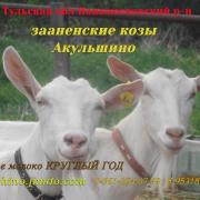 КФХ Акульшино
