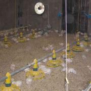 Оборудование для птицеводства