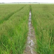 Новый гербицид для риса от Corteva Agriscience поможет повысить урожайность культуры до 70%