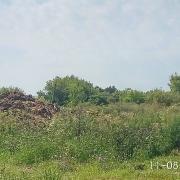 На сельхозпредприятиях двух районов Брянщины нарушили ветзаконодательство