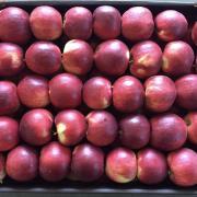 Яблоки оптом от производителя. Импорт