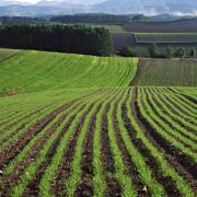 всходы сельскохозяйственных культур