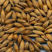 Семена озимого ячменя Стратег, Рубеж