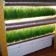 Обороудование для выгонки лука на перо в условиях любого отапливаемого помещения