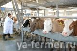 """Приглашение на выездной семинар """"Молочное животноводство и ветеринария на примере Грузии"""""""