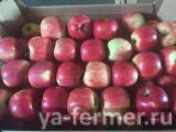 Яблоки оптом от производителя. Импорт.