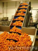<p> carrot.jpg</p>