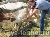 Инновации и комплексная агрономическая поддержка могут стать основными драйверами российского рынка кормов