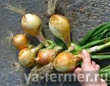 если лук большой, можно добавить и одну луковицу