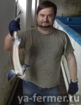 товарная рыба 1-2 кг