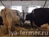 Ферма в канаде