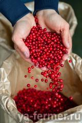 Оптические сортировщики Tomra Food способствуют увеличению рентабельности производителя дикорастущих ягод из Карелии