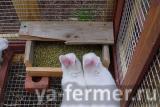 Комбикорм для кроликов с травяной мукой, мешок 30кг