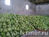 Фермерское хозяйство продаёт капусту