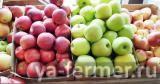 Яблоко крымское от производителя.
