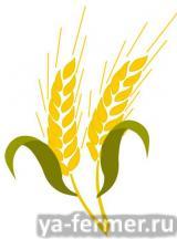 Зерно хранилось 2000 лет.