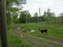 Сезон для качественного демонстрирования грязи оказался суховат, но общее мнение об улице Зеленцино в мае 2008 года возникает...