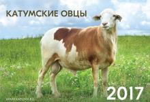 катумские овцы