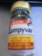 вакцина против нодулярного дерматита
