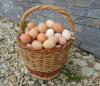 Яйцо домашнее натуральное