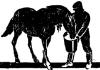 Кормление лошадей в Китае