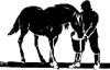 К вопросу тренировки, работы и утомления лошади