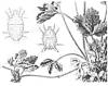 Защита земляники и малины