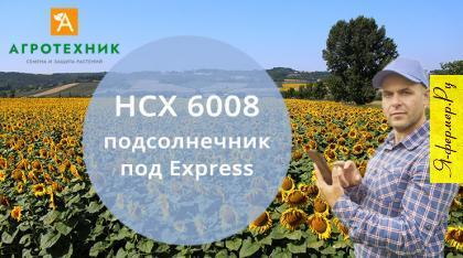 Семена подсолнечника НСХ 6008 купить